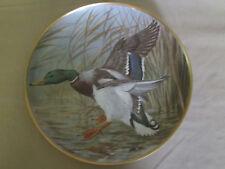 MALLARD collector plate BASIL EDE Waterbirds DUCK Birds WILDLIFE