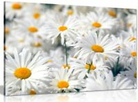 Daisys Daisy Canvas Wall Art Picture Print