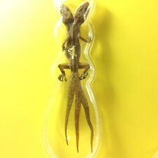 Lizard Gecko Amulet 2 Head 3 Tails Power Pendant Wealth Rich Magic Bet Gambler