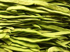 50 ROMANO POLE BEAN Italian Flat Green Pod Phaseolus Vulgaris Vegetable Seeds