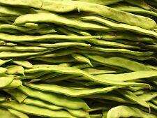 50 ROMANO POLE BEAN Italian Flat Green Pod Phaseolus Vulgaris Vegetable Seeds