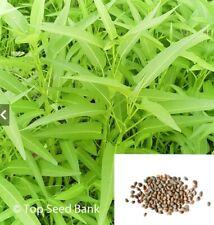 40+ Water Spinach/Kangkong/Ong Choy/Rau Muong vegetable seeds + Free Gift