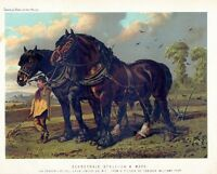 CLYDESDALE STALLION & MARE, ANTIQUE CHROMOLITHOGRAPH