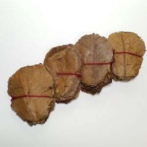 """3-4"""" Indian Catappa Almond Leaves, for Shrimp, Bettas and Aquariums"""
