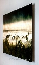 Elk in the Mist - 12x18 Ready to Hang Metal Fine Art Print. These prints POP!