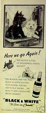 1951 Scottish Terrier Westie B&W Scotch Whisky Paper AD