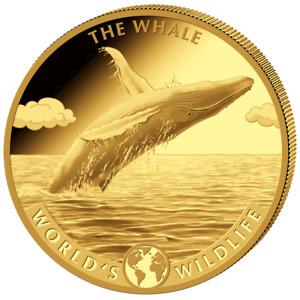 Kongo - 500 Francs 2020 - Der Wal - World´s Wildlife (2.) - 5 Oz Gold PP