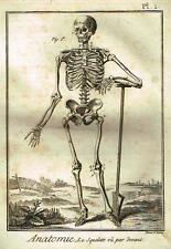 Diderots Enclyclopedie   ANATOMIE, LE SQUELETTE VU PAR DEVANT  Engraving  c1750