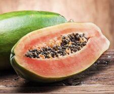 Papaya Red Caribbean Seeds (25) Fresh Free Shipping