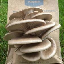 Pilzpaket Florida Austernpilz Pilzzuchtset Pilzbrut kaufen Pilze züchten Pilzbox