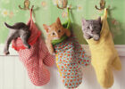 Kittens In Oven Mitts Funny Cat Mothers Day Card - Greeting Card by Avanti Press photo