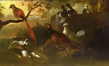 Huge Fine 17th Century Dutch Master Garden Birds Parrot Hen Ducks Oil Painting