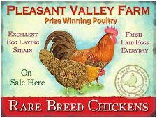 Rare Breed Chickens Fresh Farm Eggs Shop Free Range Hen Large Metal Tin Sign