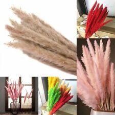 Natural Reed Dried Pampas Grass Home Decor Bunch Craft 15 Pcs Wedding Flower New