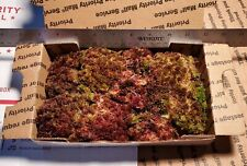 Live Red Sphagnum Moss large clusters