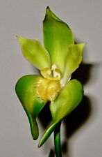 Lycaste Liberty ´Greenland´ NEW Duft Orchidee Orchideen