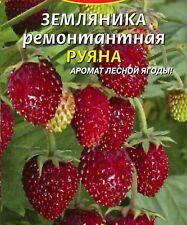 Wild Strawberry seeds Ryana 0.03 g Ukraine Земляника Руяна S0558