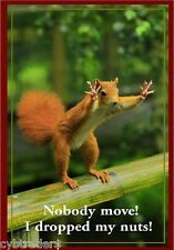 Funny Squirrel Dropped Nuts  Refrigerator / Tool Box Magnet Ad