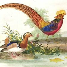 Histoire naturelle LETTRES A SOPHIE 1822 Aimé Martin 6 PLANCHES COULEURS 2 vol