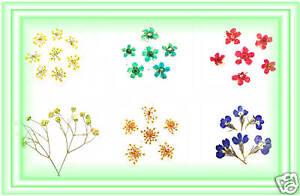 Nail Art Trockenblume Echte Trocken Blüte Blumen Set1