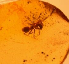 Worker Ant in Authentic Dominican Amber Fossil Gemstone