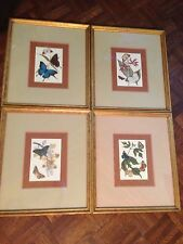 Butterflies Framed - SET Of FOUR: Chicago, IL Academy Art