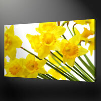 DAFFODILS NARCISSUS FLOWERS CANVAS PRINT WALL DESIGN READY TO HANG