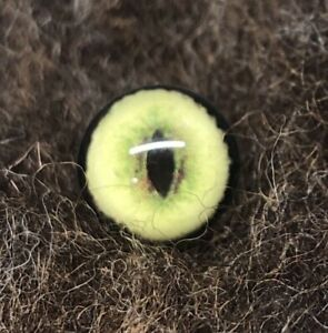 Taxidermy/model making/needle felting eyes - Wild cat 18mm (Z)