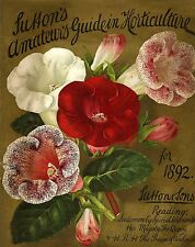 Botanical Poster Print red  pink and white flowers  wall hangings home decor A4