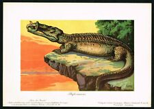 1900 Phytosaur Dinosaur, Prehistoric Reptile Crocodile, Antique Print - F.John