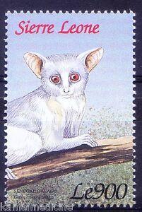Senegal bushbaby, Primates, Wild Animals, Sierra leone 1999 MNH
