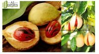 Nutmeg FRESH SEEDS 100 +  all IN FRESH condition .EXPRESS SHIPPING ,SPICES FRUIT