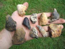 10 Colorful Mastodon Teeth Florida Fossil Extinct Ice Age Mammal Megafauna Tooth