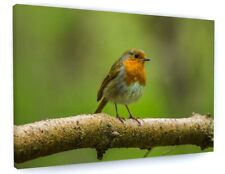 RED ROBIN BIRD CANVAS PICTURE PRINT WALL ART CHUNKY FRAME LARGE 910-2