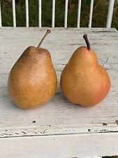Vintage & DELICIOUS Gorgeous Bartlett Pears Fake Artificial Fruit Basket ❤️sj3j