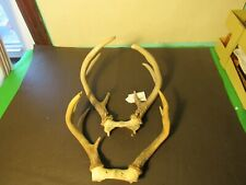 whitetail deer antlers set of 2 7 point, 6 point