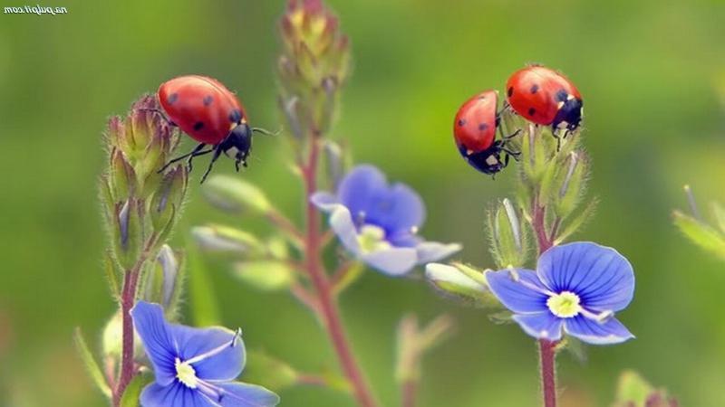 ladybugvt28