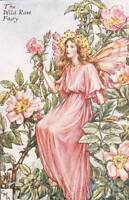 Flower Fairies: The Wild Rose Fairy Vintage Print c1930 by Cicely Mary Barker