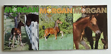 3 MORGAN HORSE Breeders Guide STALLION Issues 2005 2006 2007