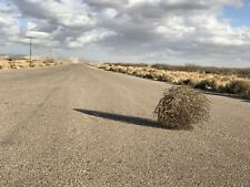 "Natural Texas Tumbleweed, Size Medium/Large 20"""