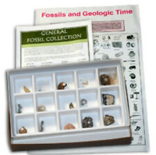 General Fossil Collection Sample Kit Paleontology Extinct Animals Plants (18)