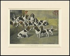 BASSET HOUND PACK IN KENNELS VINTAGE STYLE DOG PRINT MOUNTED READY TO FRAME
