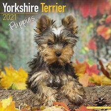 Yorkshire Terrier Puppies Calendar 2021 Premium Dog Breed Calendars