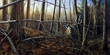 "Jim Hansel ""Under Cover"" Deer Buck Art Pint  33"" x 17"""