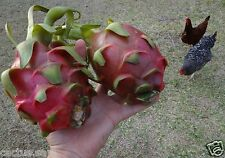 100 Seeds Dragon Fruit, Pitaya Pitahaya Hylocereus undatus Queen Of Night Cactus