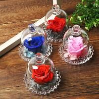 Forever Fresh Rose Flower Festive Mom Preserved Immortal in Glass Romantic Gift