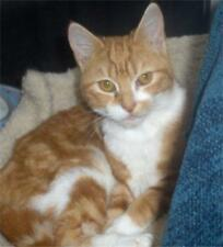 Sponsor a Cats Protection Cat for One Year - Maeve