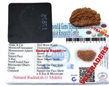 1 Mukhi Rudraksha / One Face Rudraksh Lab Certified Size : 25 - 27 MM
