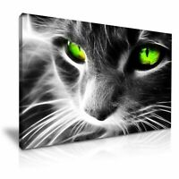 Green Eyes Cat  CANVAS WALL ART PICTURE 20X30 INCHES