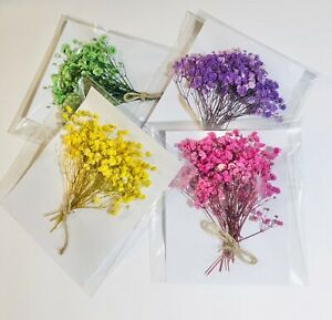 Preserved Baby's Breath Flowers for Resin, Candle, Postcard, Jewelry